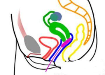内置式卫生棉条的使用方法图解 与卫生巾的区别